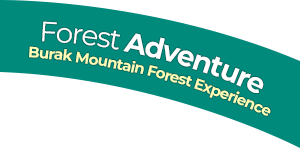 Forest Adventure Burak Mountain Forest Experience